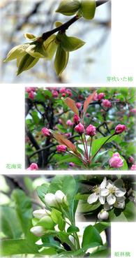 庭に来た春